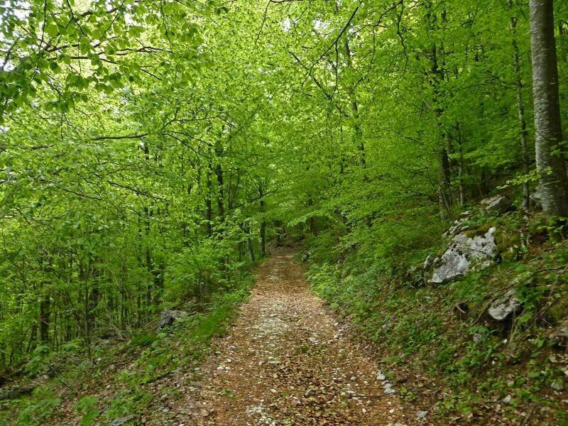 Domenica 8/8: escursione in Lessinia con CuriosaNatura